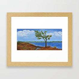 Windswept Pine at Killbear by Monika Framed Art Print