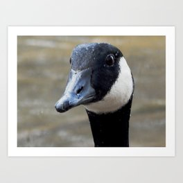 Goose water droplets Art Print