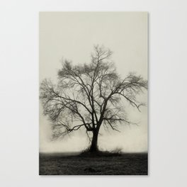 Bare Branches in Winter Fog Canvas Print