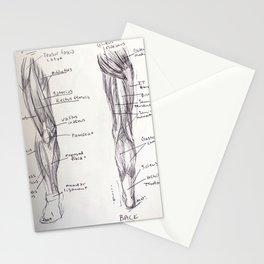 Leg Anatomy Stationery Cards