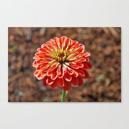 Single orange dahlia Canvas Print