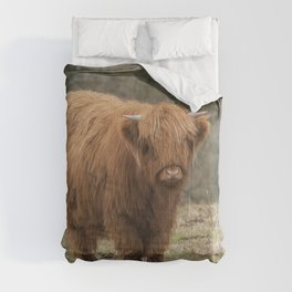 Scottish Highland young cow Comforters