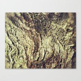 Bark Landscape Canvas Print