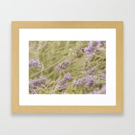 A bee on the lavender #2 Framed Art Print