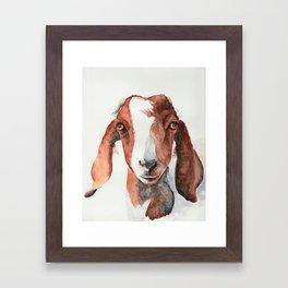 Boer Goat Watercolor Framed Art Print