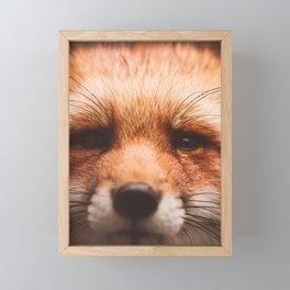 Red fox 2 Framed Mini Art Print