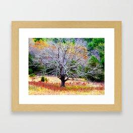 Cades Cove Tree Framed Art Print