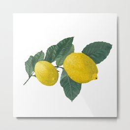 Oil painting of a lemon tree branch with two lemons, isolated on white background. Metal Print