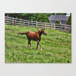 Horse on the Run Canvas Print