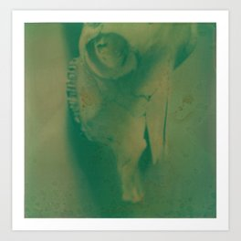 Cow Skull Polaroid Art Print