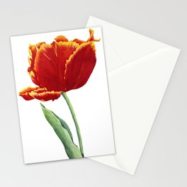 """Tulip """"Bright Parrot"""" Stationery Cards"""