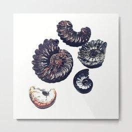 Ammonite illustration Metal Print