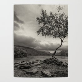 The Lonely Tree Snowdonia Wales Journey of Mountains Poster