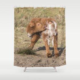 Baby licking Scottish Highland Coo Shower Curtain