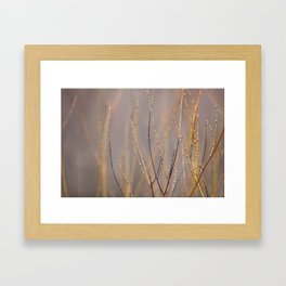 Canadian Prairies 1 Framed Art Print