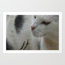 Close Up Of A Piebald Cat Art Print