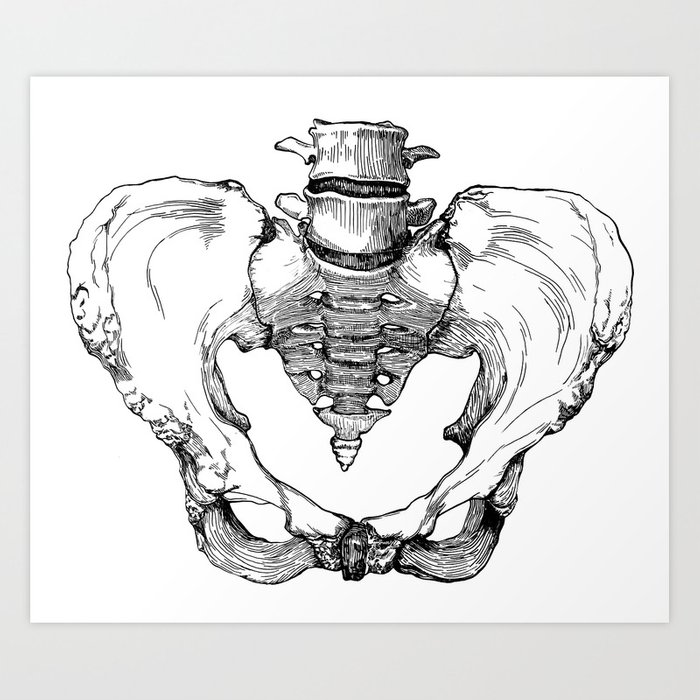 Pelvic Bone Art Print by autumnkulaga | Society6