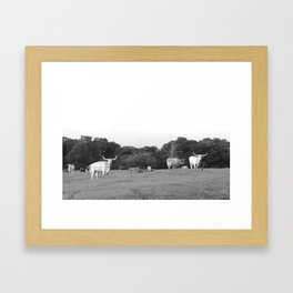longhorn  Framed Art Print