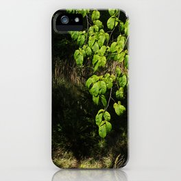Forest and Green Leaves iPhone Case