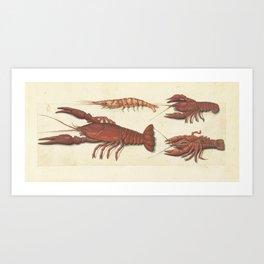 Lobster, Crawfish and Shrimp Vintage Illustration, 1560 Art Print