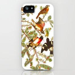 Rose-breasted Grosbeak Bird iPhone Case