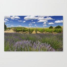Countryside Vinyard Canvas Print