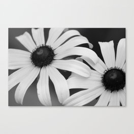 Black Eyed Susans Black & White Canvas Print