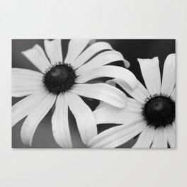 Black Eyed Susans Black & White Canvas Print