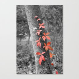 Creeper Canvas Print