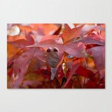 Autumnally Sad Canvas Print