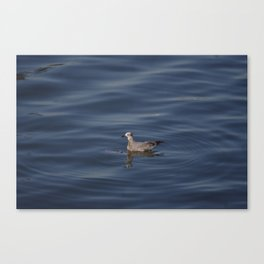 Seagull at the ocean Canvas Print