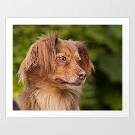 A cute brown dog portrait Art Print