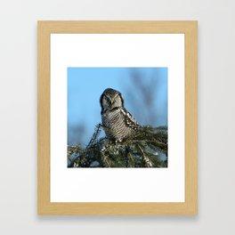 Atop a fallen branch Framed Art Print