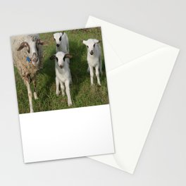 Ewe and Three Lambs Making Eye Contact Stationery Cards