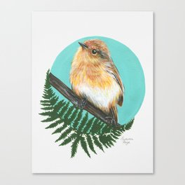 Eastern Robin Canvas Print