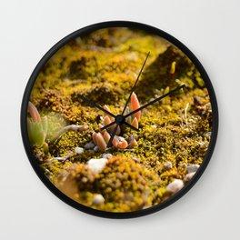 Macrocosmo Wall Clock