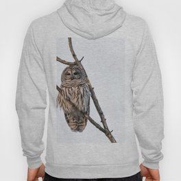 Barred Owl visitor on New Years Eve Hoody