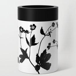 Ranunculus Aconitifolius Can Cooler