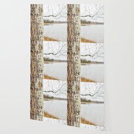 Aspen bark and gray lake Wallpaper