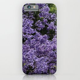 Flowering Jacarada Tree iPhone Case