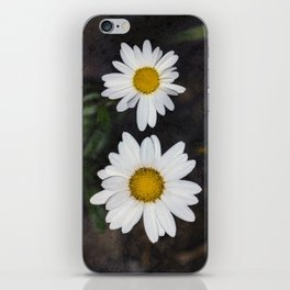 Old And Young Daisies Texture iPhone Skin