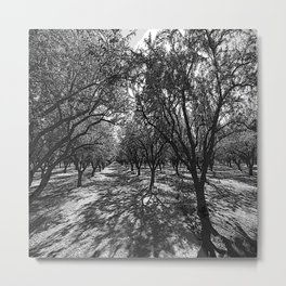 Black & White California Almond Orchard  Pencil Drawing Photo Metal Print