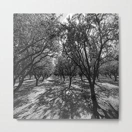 Black & White California Almond Orchard  Pencil Drawing Photo Metal Print