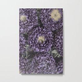 Metallic Purple Mums on a Metal Background Metal Print