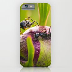 Ants Working On A Peony Flower Bud Macro iPhone 6s Slim Case