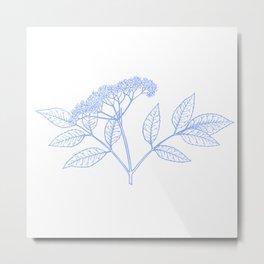Elderflower In Blue Minimalist Nature Metal Print