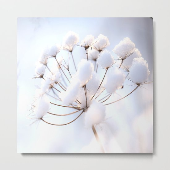Snow covered dryflower Metal Print