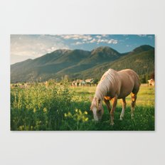 Pretty Horse Eating Grass in the Montana Sunset Canvas Print