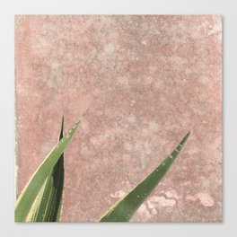 Cactus on Weathered pink wall Canvas Print