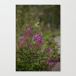Yukon Fireweed Canvas Print